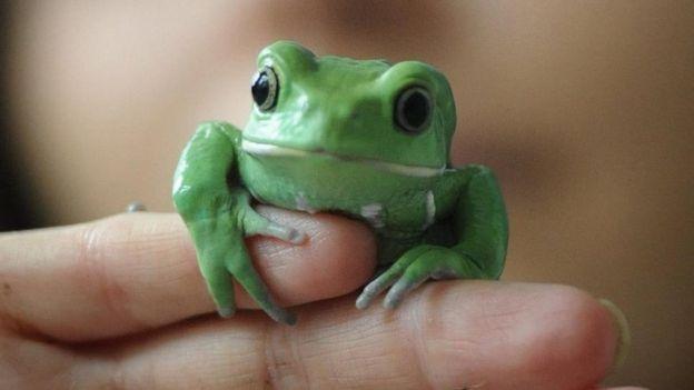 Frog Asda